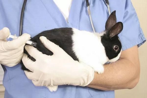 Дитрим для кроликов инструкция по применению